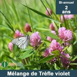 Mélange de TRÈFLE VIOLET bi-annuel bio - 2 ans