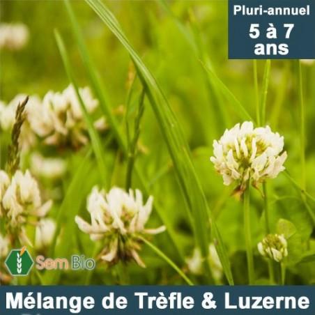 Mélange TRÈFLE (12%) - LUZERNE (38%) Pluri-annuel bio