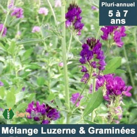 Mélange LUZERNE (85%) -GRAMINÉES (15%) pluri-annuel bio