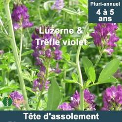 Tête d'assolement bio - LUZERNE (50%) - TREFLE VIOLET (15%)