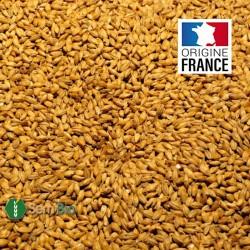 ORGE en Grain BIO - Produit en France