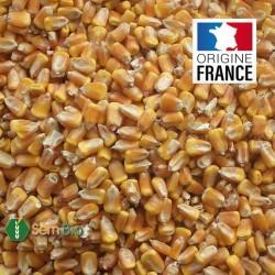 MAÏS en Grain BIO - Produit en France
